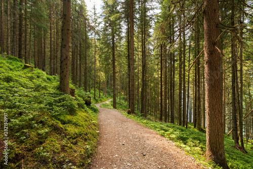 Obraz Idylischer Weg durch den Wald - fototapety do salonu