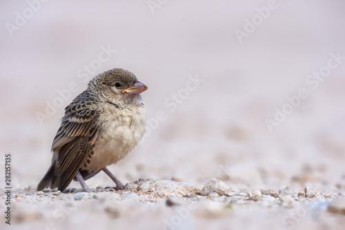 Little, cute baby bird. Canvas Print