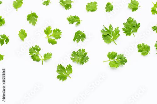 Fresh coriander leaves on white background. - 282158565