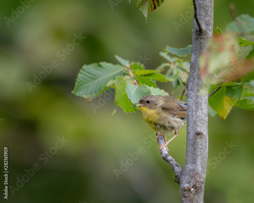 Vertical image of warbler eating a insect Canvas-taulu