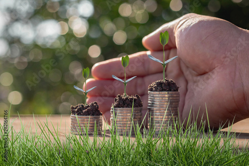 Fotomural Caring for small green trees in hand