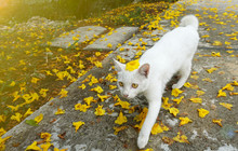 A White Cat Walking In Garden