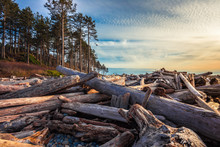 Piles Of Driftwood On Ruby Beach