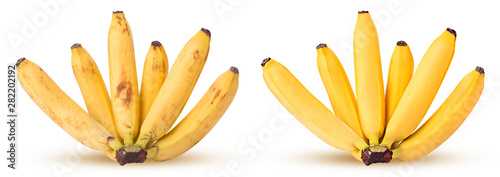 Bunch of bananas before processing, and after Canvas Print