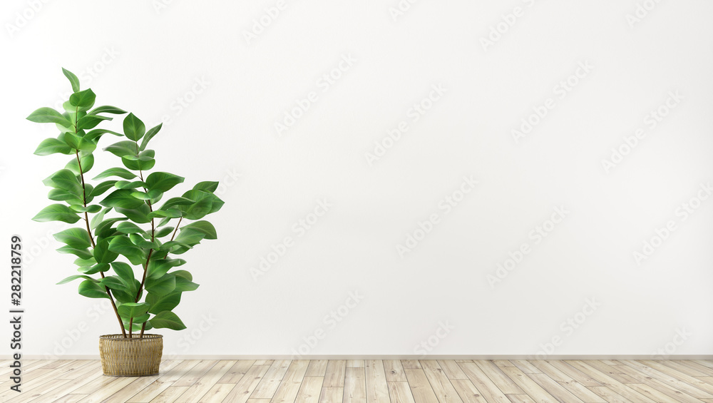 Fototapety, obrazy: Interior background with plant 3d render