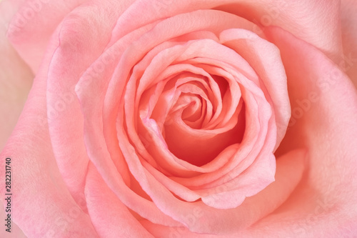 Recess Fitting Roses pink rose background