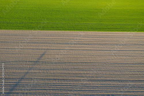 Obraz pola uprawne z lotu ptaka, żółty zielony młody rzepak, zborze  - fototapety do salonu