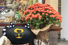Bouquet Of Orange Chrysanthemums Flowers And Toys Black Cat