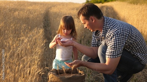 Fototapeta father farmer plays with little son, daughter in field. grain of wheat in hands of child. Dad is an agronomist and small child is playing with grain in bag on a wheat field. Agriculture concept. obraz
