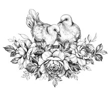 Doves Couple With Roses Pencil Drawing