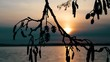 View of Sunset At Lake Looking Through Silhouetted Branches
