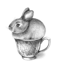 Little Hare Sitting In Cup