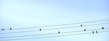 Swallows On The Wires Like Notes