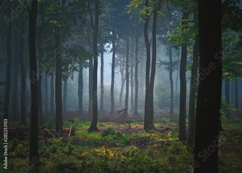 Foto auf Acrylglas Wald im Nebel Nebel im Wald