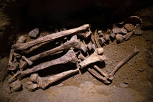 Prehistoric Human Bone Remains. Ancient Skeleton Discovered By Archeologists, Scientist Analyzing And Doing Research Of Bones In The Ground