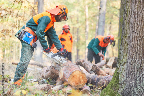Group lumberjack in the forest saws logs
