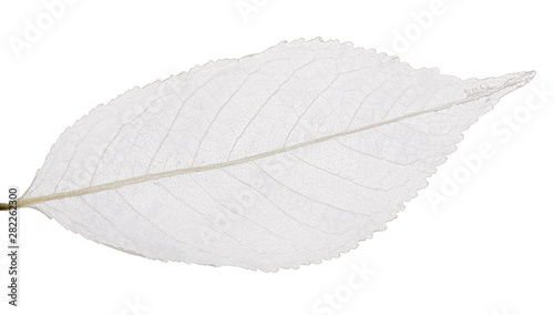 Spoed Foto op Canvas Londen isolated grey cherry tree leaf skeleton