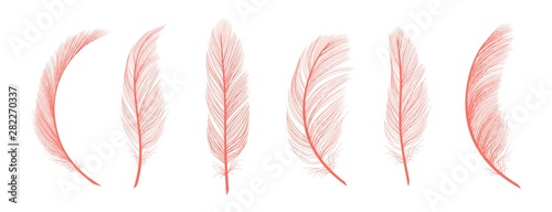 Trendy coral feathers Canvas Print