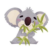 Cute Koala Eats Bamboo Leaves. Vector Illustration On White Background.