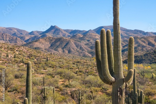 Photo scenic and historic mountain view at Apache trail Arizona, cactus landscape red