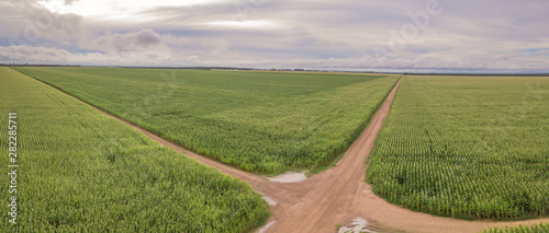 Aerial drone view of Cornfield and dirt roads in clear summer day Canvas Print