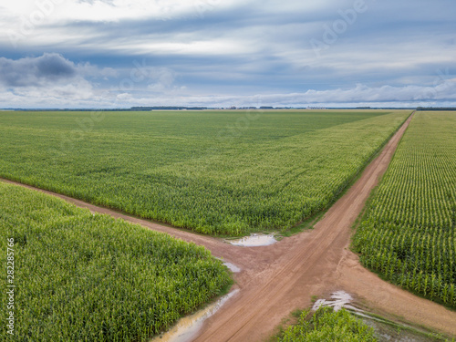 Fotografija  Aerial drone view of Cornfield and dirt roads in clear summer day