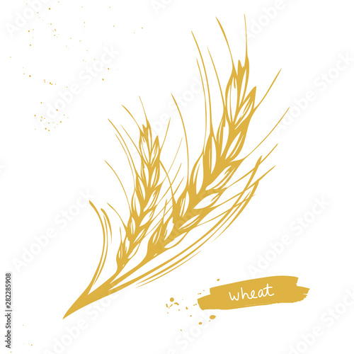 Canvas Golden wheat, barley ears symbol