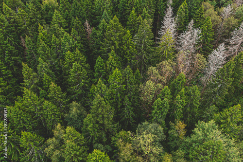 Fototapeten Wald Aerial view of the autumn forest with dry old white trees. Forest texture top view