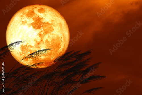 blood strawberry moon on night red sky back silhouette grass flowers Canvas Print
