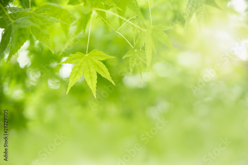 Photo  Close up of nature view green maple leaf on blurred greenery background under sunlight with bokeh and copy space using as background natural plants landscape, ecology wallpaper concept