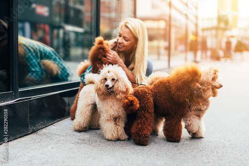 Beautiful middle age blonde female dog walker, enjoys walking with adorable miniature poodles in city street. - 282290358