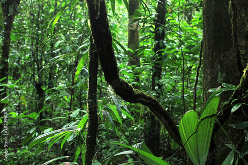 Photo Stands Green view of beautiful and mystical untouched jungle of French Guiana. mossy tree branches and plants on green rainforest background.