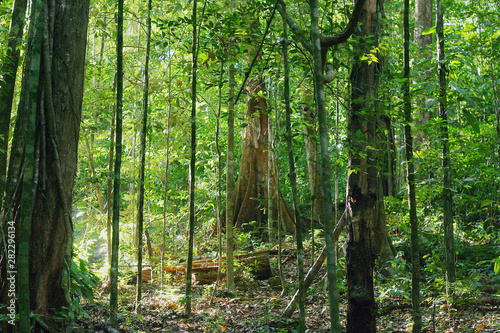 Pinturas sobre lienzo  view of beautiful and mystical untouched jungle of French Guiana
