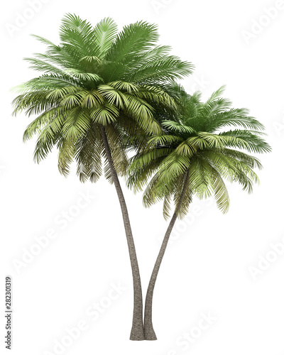 two coconut palm trees isolated on white background Canvas Print