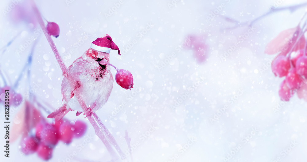 Fototapeta Winter christmas tender magic forest tale. Pink bright berries and sparrow in santa hat in a snowy park. New year concept. Free space for text. Wide format.