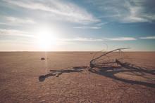 Dead Branch In Desert At Sunset
