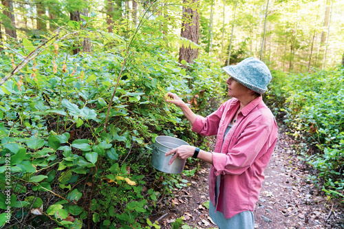 Woman picking huckleberries on forest trail in British Columbia Canada Slika na platnu