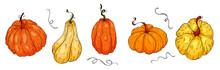 Hand Drawing Pumpkins, Autumn ...
