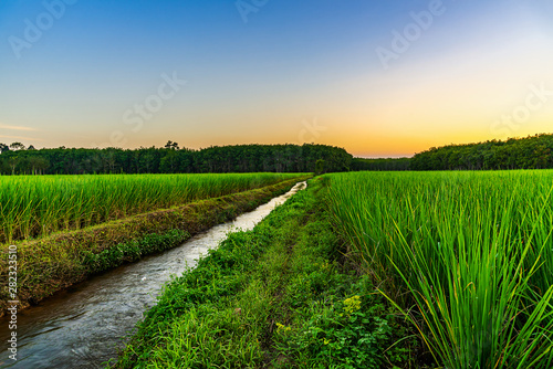Foto auf AluDibond Grun Rice field with color of sky in twilight