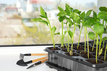 Vegetable Seedlings And Garden Tools On Window Sill Indoors