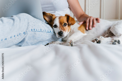 young caucasian woman on bed working on laptop. Cute small dog lying besides. Love for animals and technology concept. Lifestyle indoors - 282330775