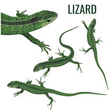 Set Of A Lizards