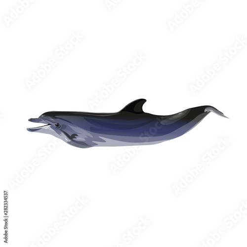 Common dolphin vector Canvas Print