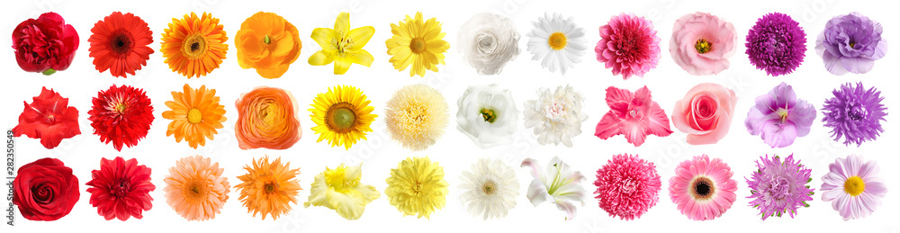 Fototapeta Set of different beautiful flowers on white background. Banner design