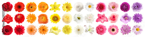 Set of different beautiful flowers on white background. Banner design