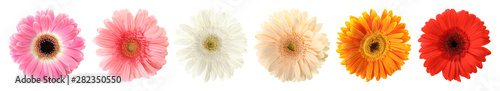 Set of beautiful gerbera flowers on white background. Banner design