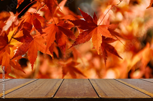 Perspective wood counter with autumn Japanese maple tree background. - 282355346