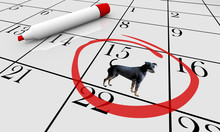 Dog Pet Animal Calendar Day Da...
