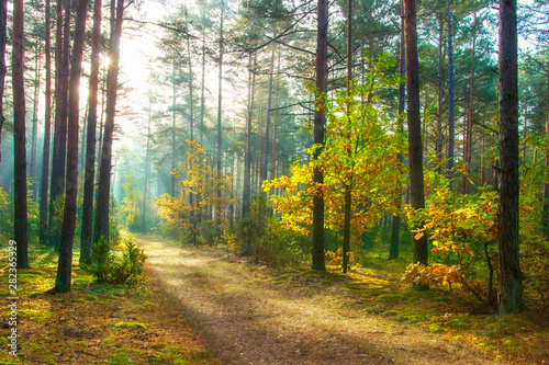Foto op Aluminium Honing Autumn. Scenic forest illuminated of sun. Beautiful sunny nature landscape