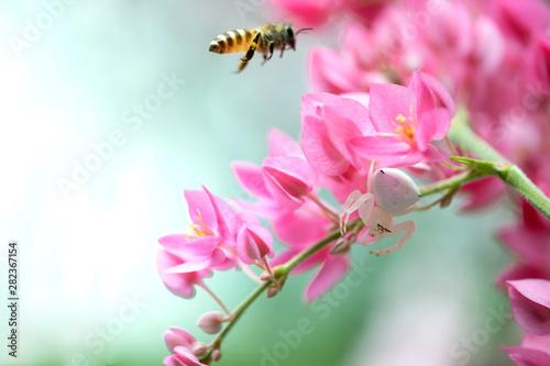 Blooming flowers in the Spr...